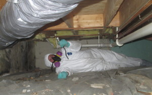The Mold Expert Inspects a Crawl Space