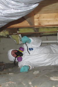 A Mold Inspection
